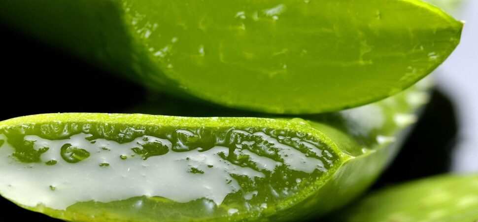 The benefits of Aloe Vera on your skin!
